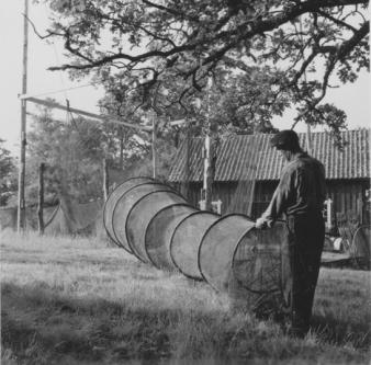 Garnhage ed garnstolpar och bottengarn, Värnanäs 1954